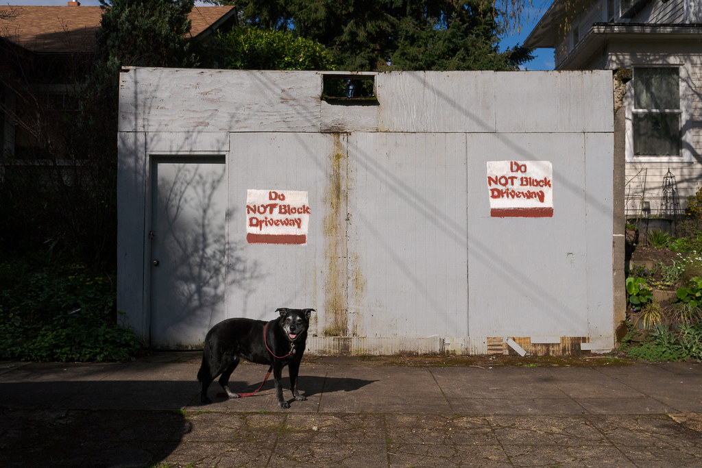 Our dog Ellie stands in front of an old garage with signs saying Do Not Block Driveway in the Irvington neighborhood of Portland, Oregon in April 2017