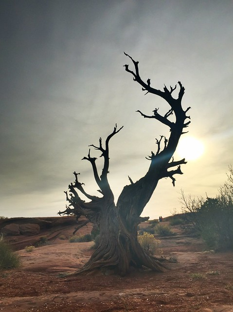Crooked Tree Moab