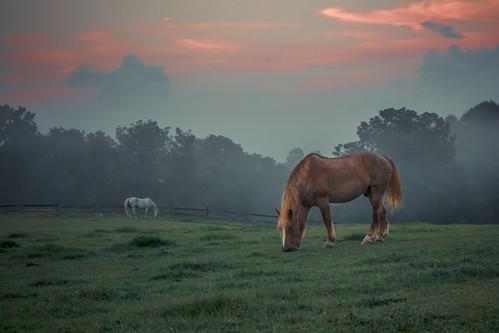 ridley creek state park pa pennsylvania nature horses equine dusk twilight sunset sky clouds mist fog evening hidden valley dinner grazing