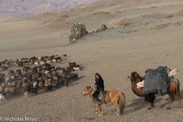 Herder With Camel