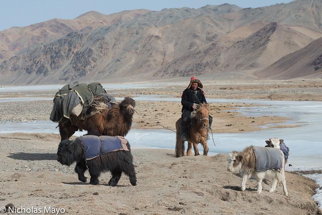 Yaks, Camel & Herdsman