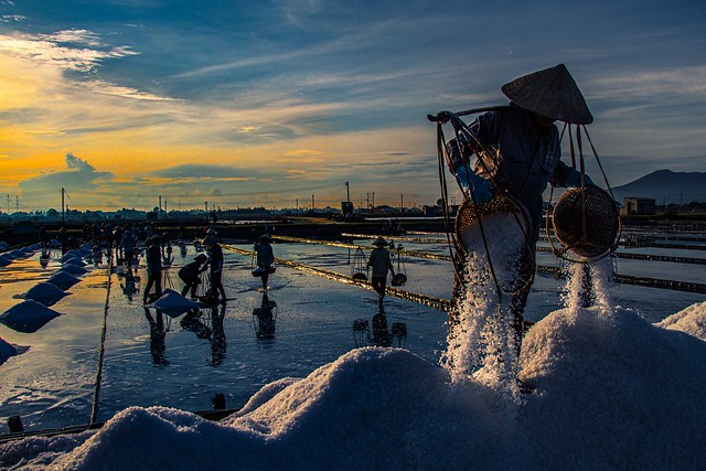 Morning Salt Field