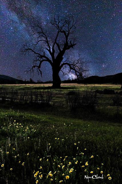 Milky Way at Carrizo Plain, California