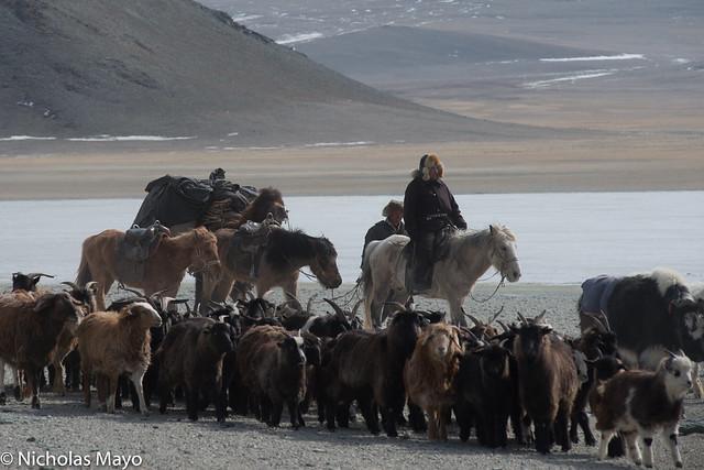 Herdsmen With Their Animals