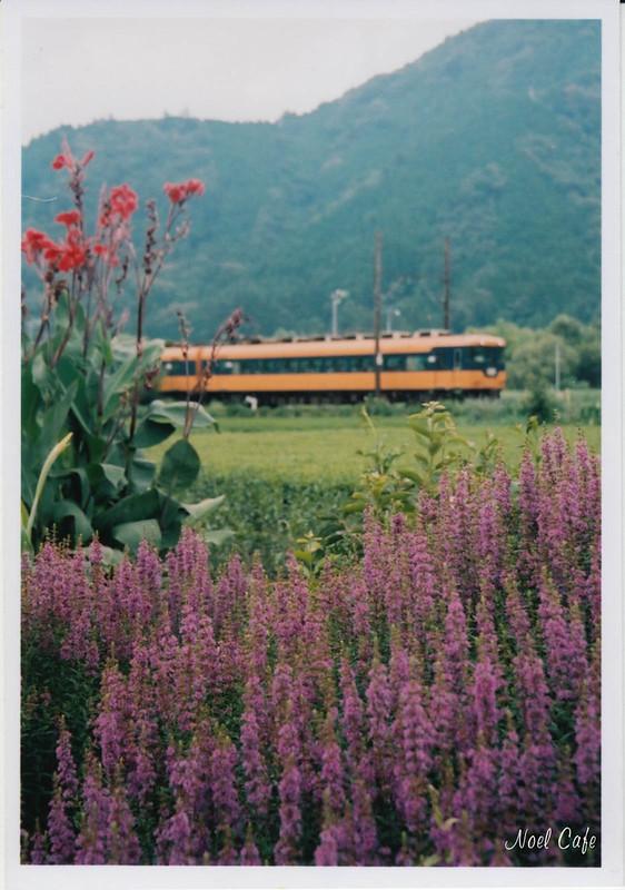 flowers of summer by Noël Café