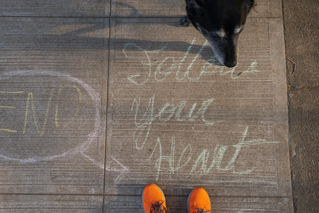 Our dog Ellie stands above the words 'Follow Your Heart' written on the sidewalk in chalk in the Irvington neighborhood of Portland, Oregon in August 2017