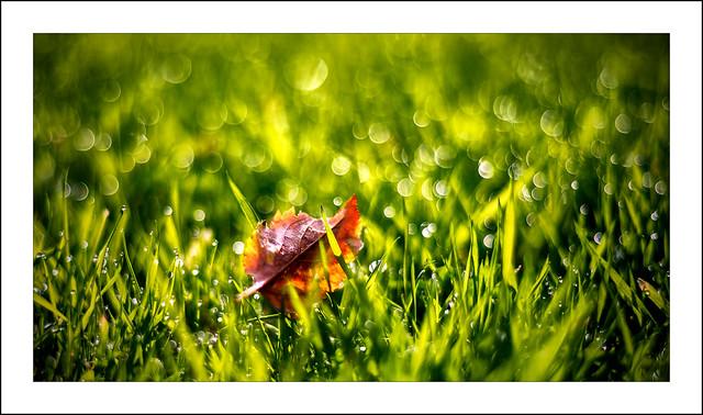 Autumn is near...!