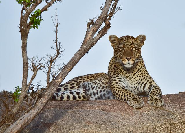 African Safari.  Dignity.