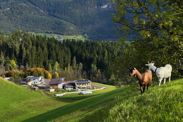 Schindeltal - Inzing, Tirol / In Explore #204