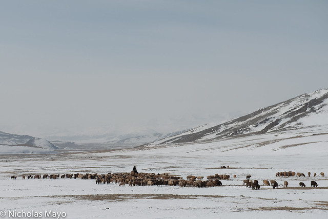 Grazing In The Snowy Valley