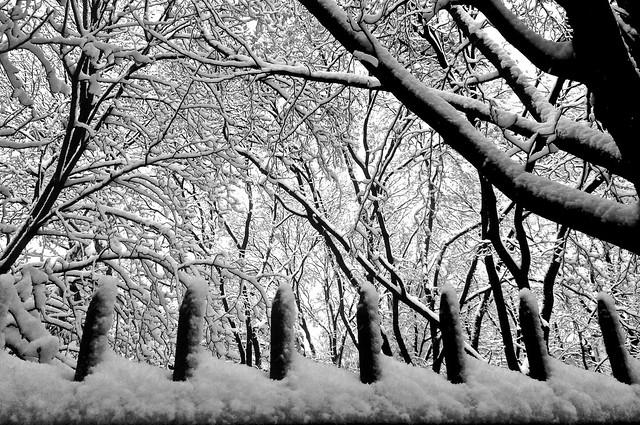 Snow on fence - Chelsea, New York City