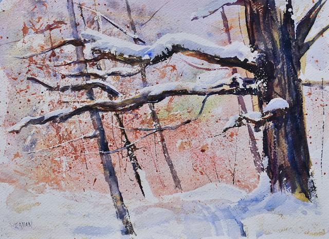 Snow Covered Limbs