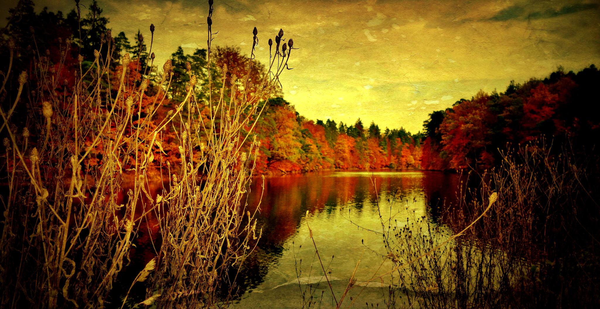 Germany, Herbst rund um den Bärensee bei Stuttgart, 75637/9113
