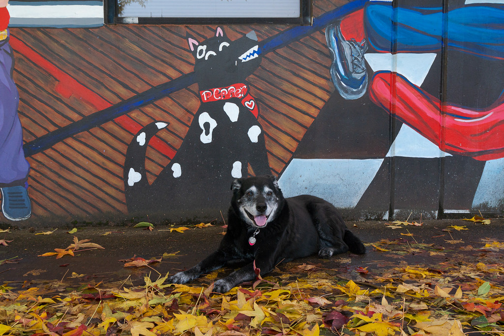 Our dog Ellie sits beside a mural containing a dog named Pepper in the Irvington neighborhood of Portland, Oregon in November 2017