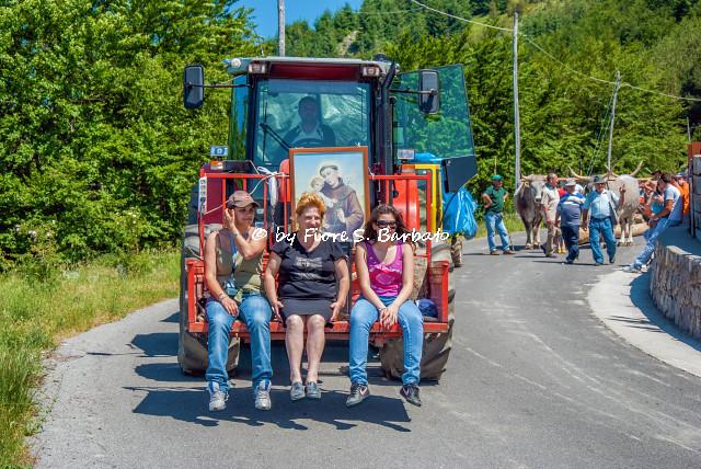 Rotonda (PZ), 2009, Festa di Sant'Antonio, il trasporto della