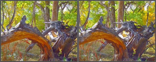 DSCF9223=2-Stereo Photo/3D