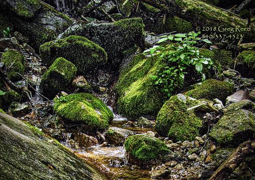fern moss waterfall waterfalls creek virginia wigwamfalls yankeehorseridge blueridgeparkway georgewashingtonjeffersonnationalforest nationalforest forest stream