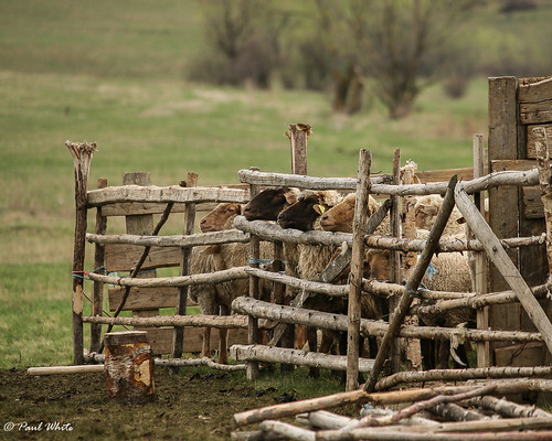 Sheepfold | by p_aulwhite