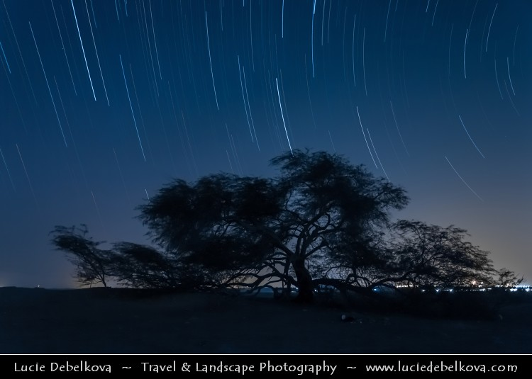 Bahrain - Star Trails over Tree of Life