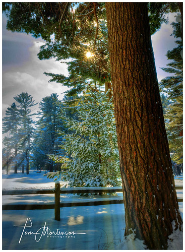 wisconsin woods countypark marathoncounty hdr photomatix whitepine winter snow 1740l canon canoneos canon6d geotagged america usa wausau wausauwisconsin midwest northamerica pinetree sunrise earlymorning dawn northwoods centralwisconsin