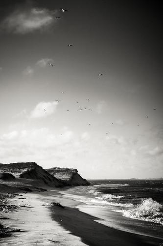 Seabirds | by chmeermann | www.chm-photography.com