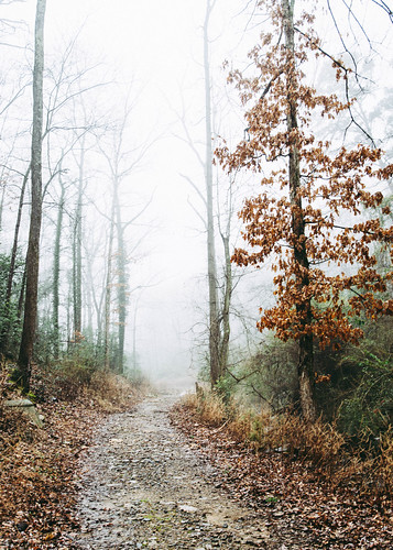arkansas nikon nature d500 arkansasoutdoors fog littlerock 2019 hiking landscape naturalstate