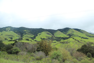 Vin i California / vinogvegetar.no | by Synne Cinnamon