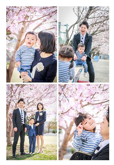 小学校入学記念の家族写真 スーツを着て桜の花の下で
