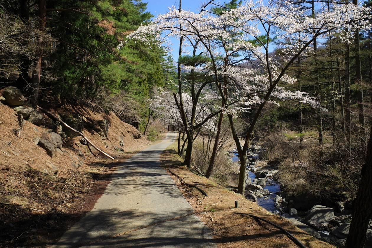 三ッ峠山 林道歩き