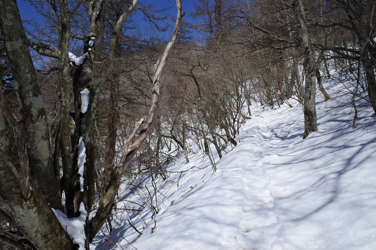 三ッ峠山 雪の稜線