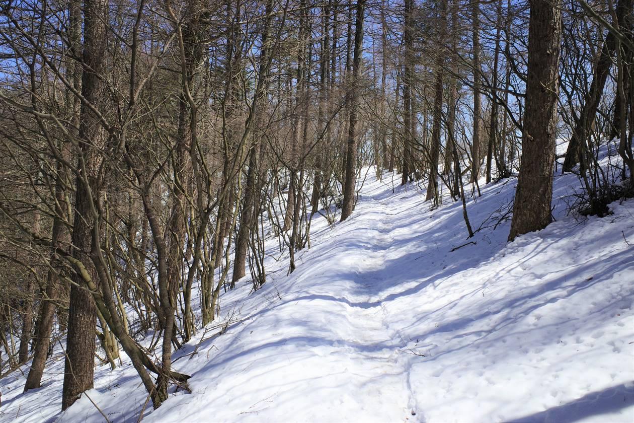 新倉山浅間公園~三ッ峠山 日帰り残雪登山