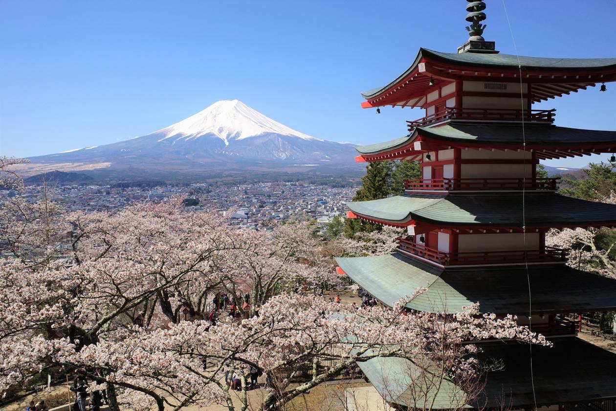 春の新倉山浅間公園 五重塔と富士山と満開の桜