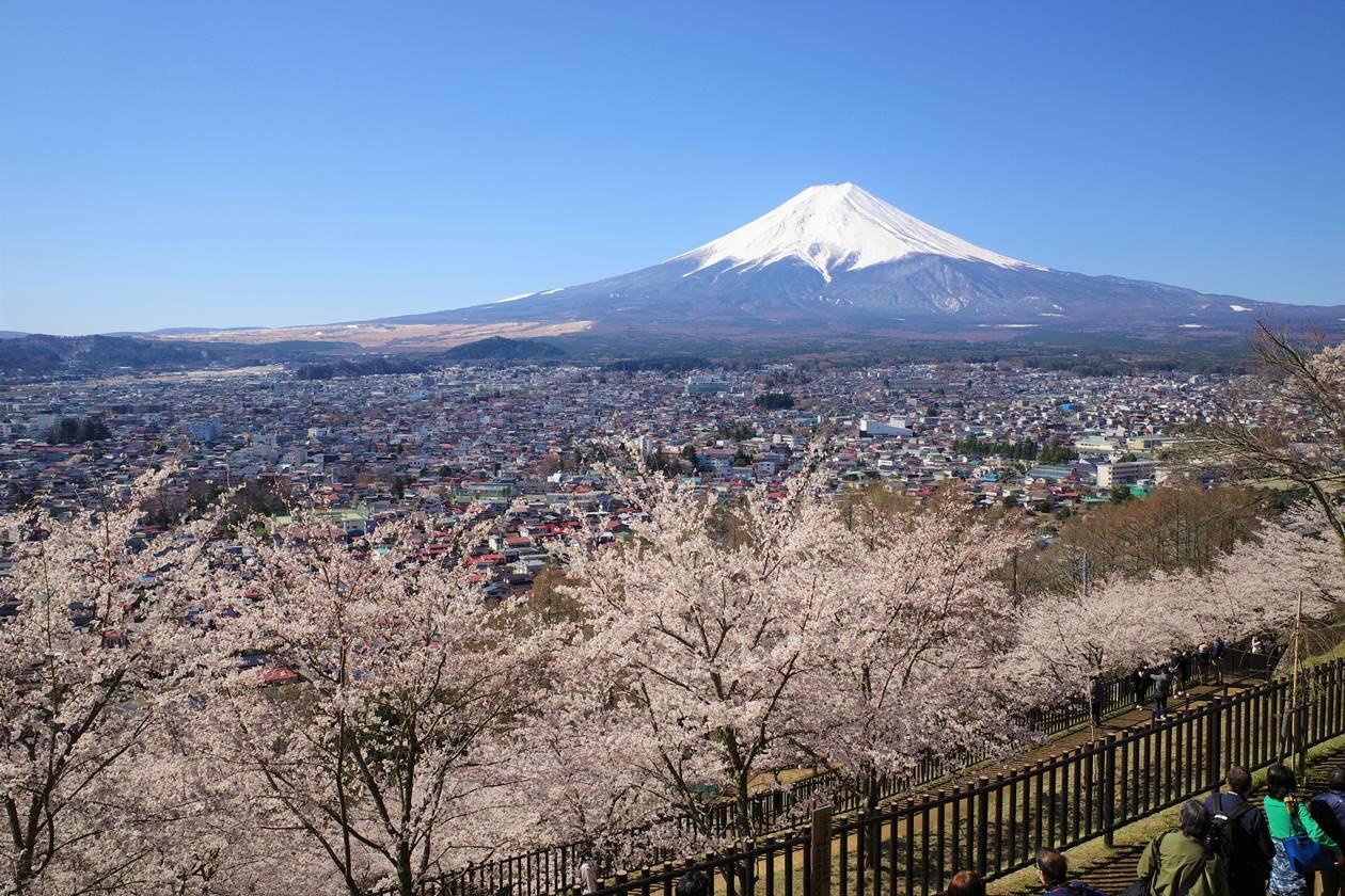 新倉山浅間公園からの桜と富士山
