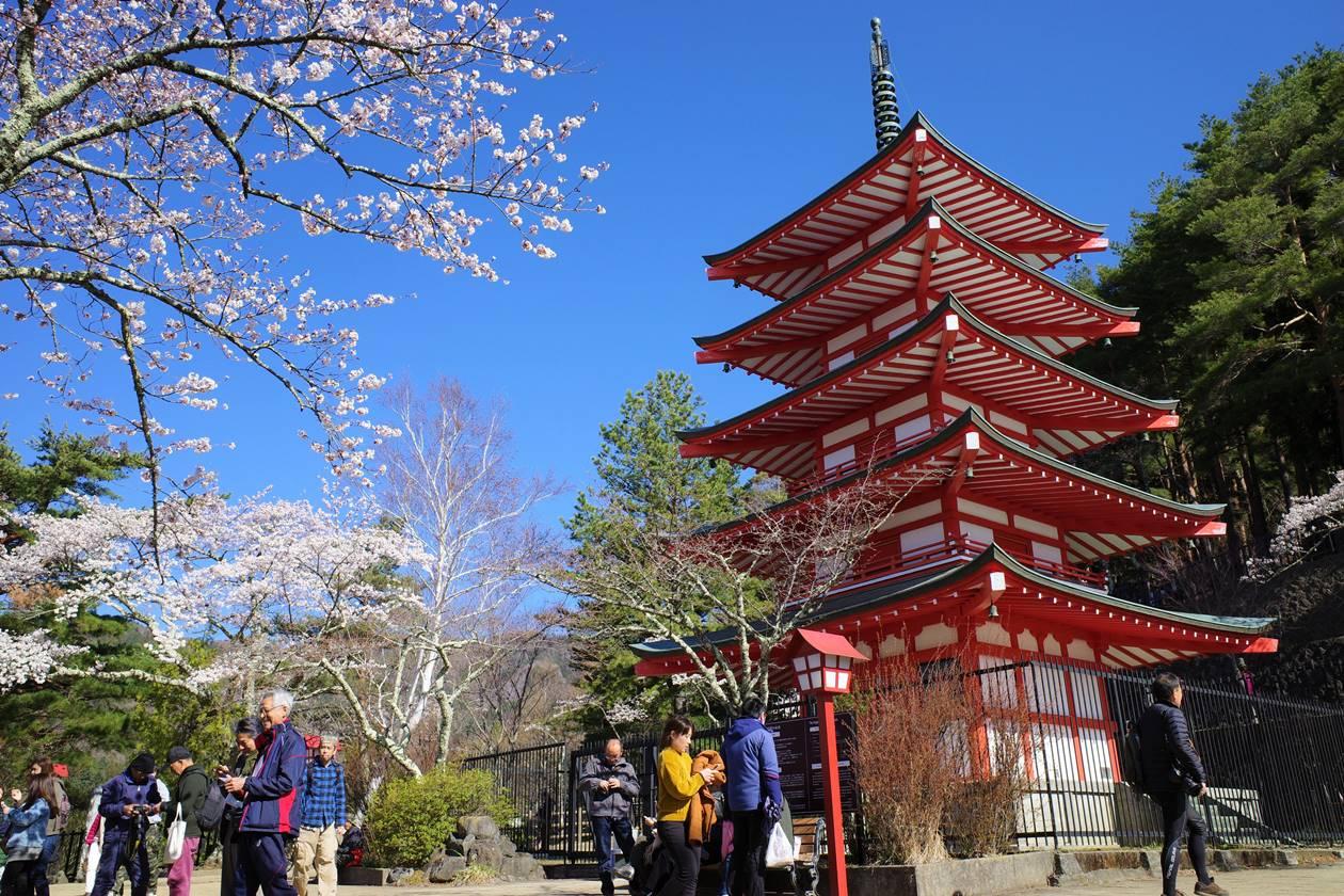 新倉山浅間公園・五重塔と桜