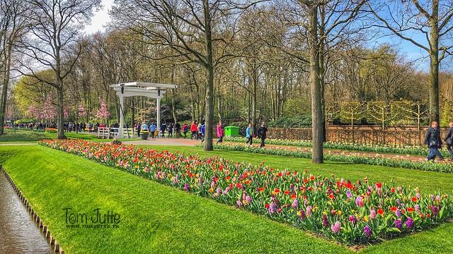 Keukenhof Gardens, Spring Flower Park, Netherlands - 2391