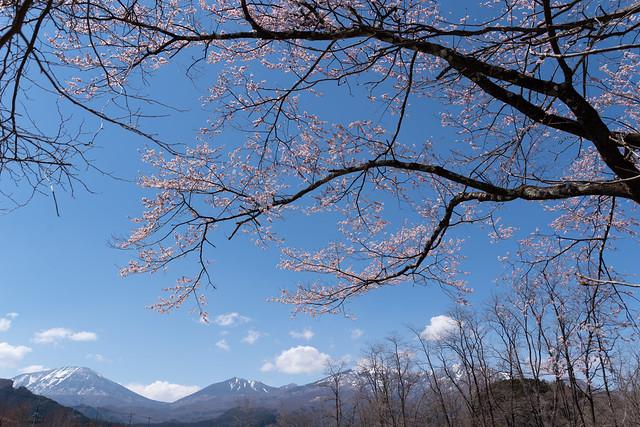 ある晴れた春の日の午後
