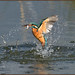 Kingfisher (image 1 of 3) by Full Moon Images