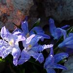Frosty  Flowers - av evisdotter