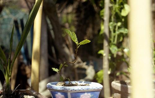 Prove di bonsai | by toscano libero