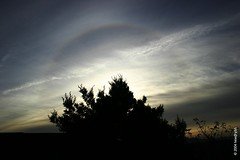 circular halo