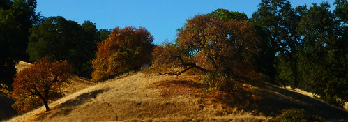 101 the101 northern california tree hills hils morning foot footpath steps hillside sky blue yellow summer green golden norcal scene scenic scenery