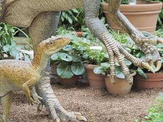 Allosaurus juvenile dinosaur | by nano.maus