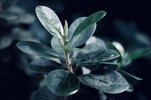 Little leaf | by deddyfebrianto1994