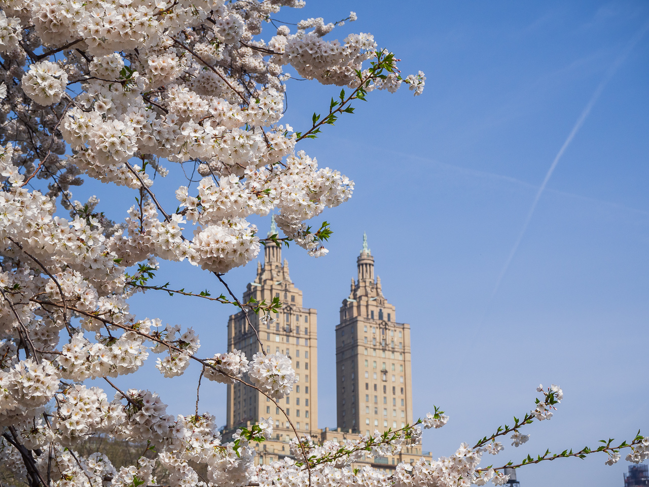 New York, blossoms