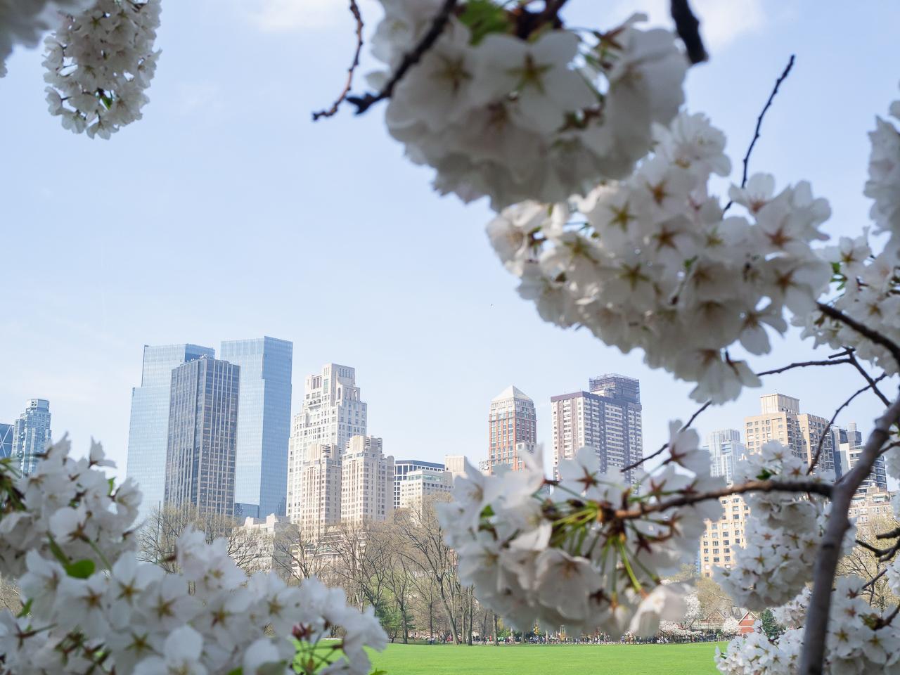 New York, blossoms