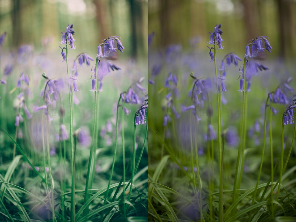 bluebells collage