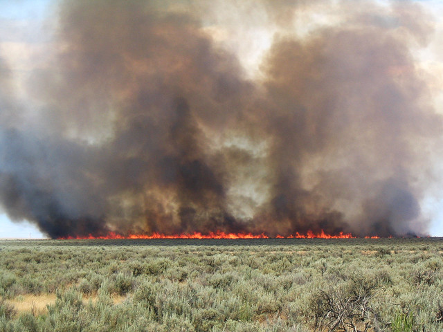 A wildfire burning through a Wyoming big sagebrush ecosystem