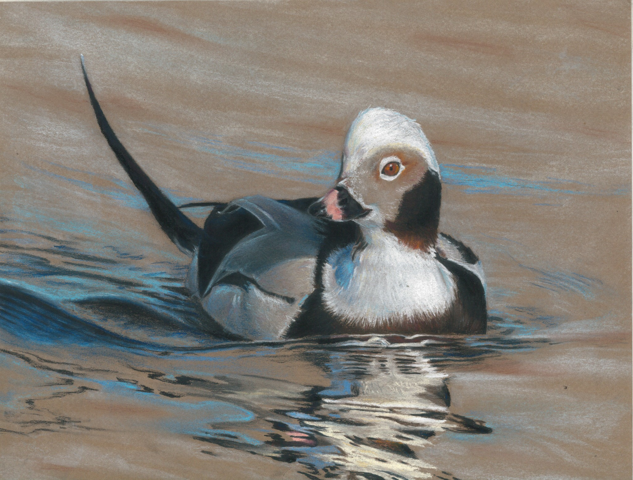 Painting of a long-tailed duck.