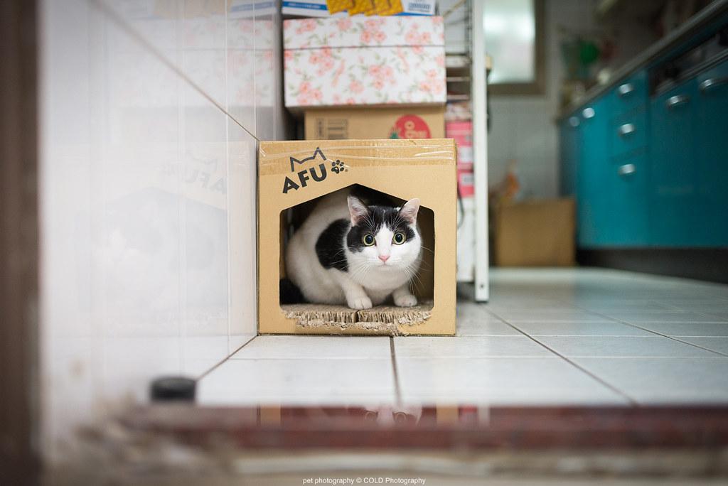 台北寵物攝影