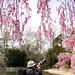 Brooklyn Botanic Garden by joe holmes